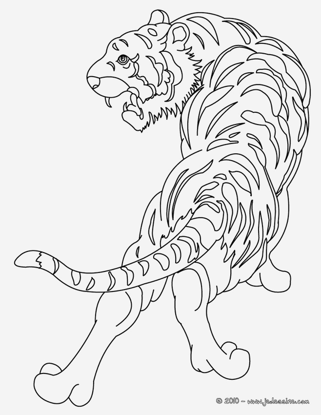Coloriage Animaux De La Jungle Gratuit New Coloriages De Tigres Coloriages Coloriage   Imprimer Of Coloriage Animaux De La Jungle Gratuit