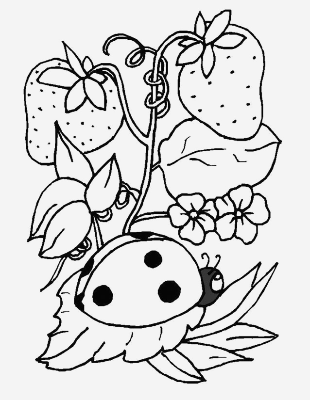 Coloriage Coccinelle Awesome Coloriage Coccinelle   Imprimer Gratuitement Of Coloriage Coccinelle