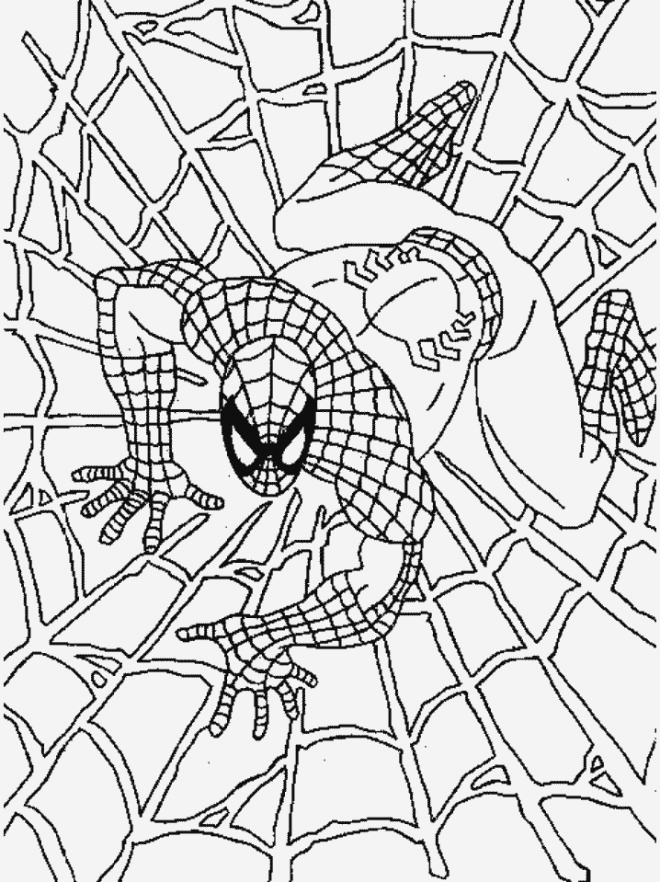 Coloriage De Spiderman Beautiful Coloriage Spiderman Couleur Dessin Gratuit   Imprimer Of Coloriage De Spiderman