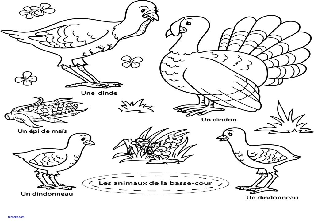 coloriage animaux basse cour